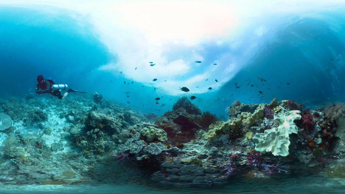 Auf dem Bild ist ein Korallenriff zu sehen. Ein Taucher schwimmt hindurch.