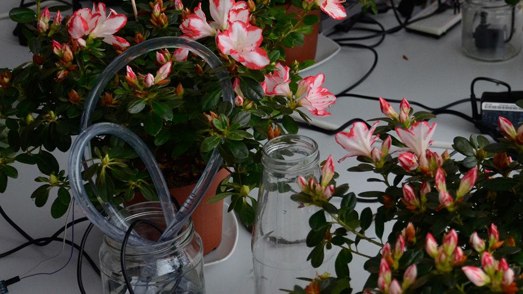 Informatik trifft auf Botanik - Smarte Pflanzen