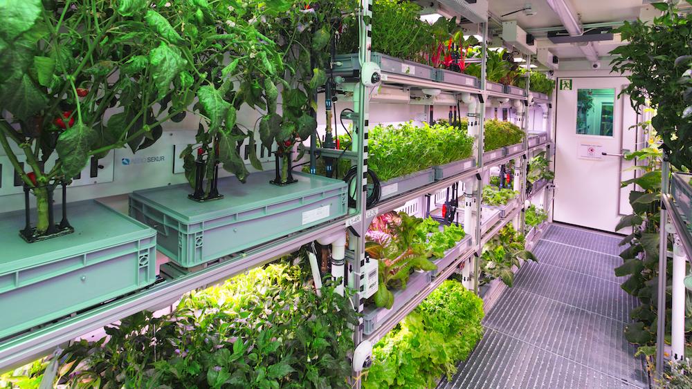 EDEN ISS: Pflanzenanbau im Weltall (Block 1 / 8:30 Uhr - 10:45 Uhr)